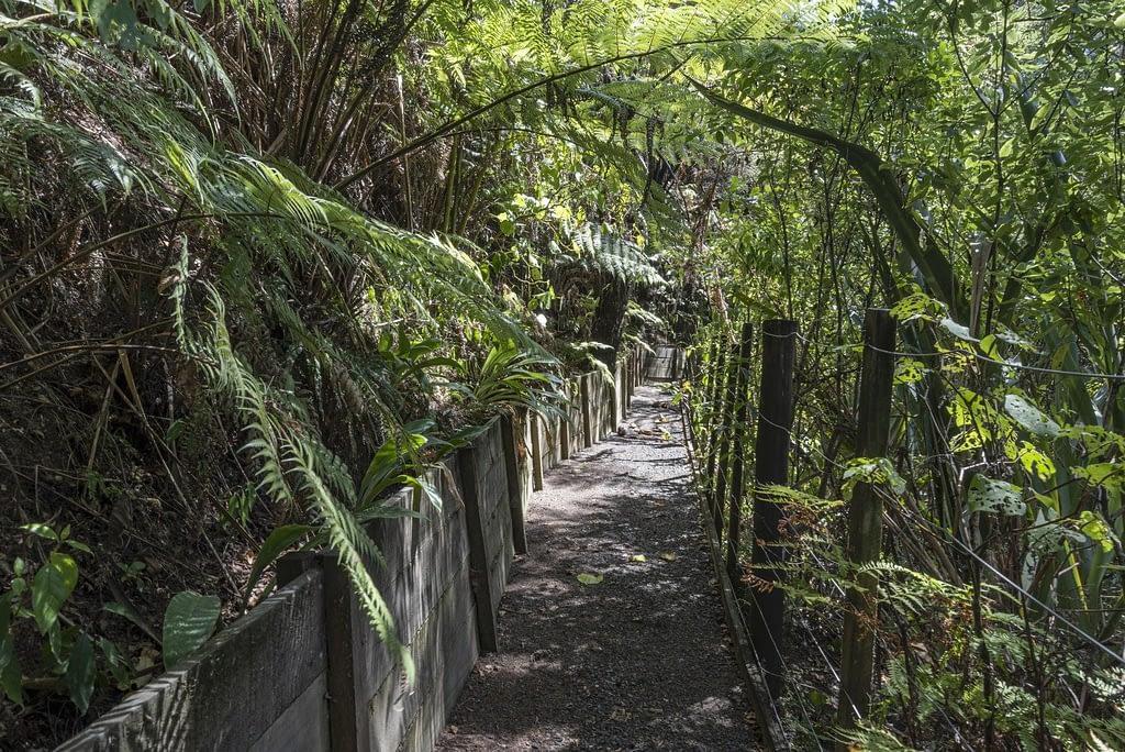 Bush walk Whangaroa